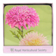 Queens RHS Dorothy Martin Coasters (Pack of 4)